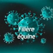 Filière équine coronavirus